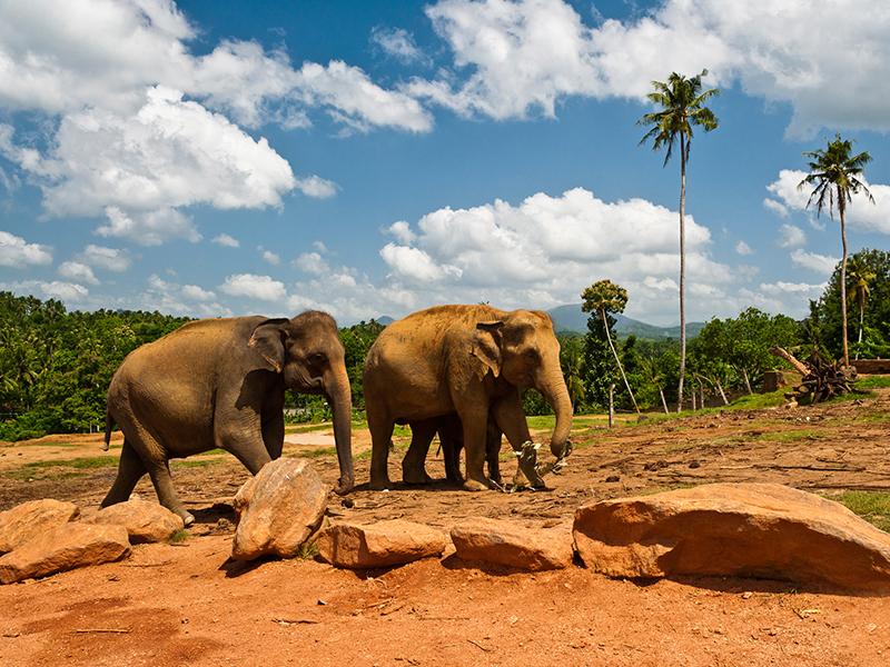 包罗万象 斯里兰卡全景之旅