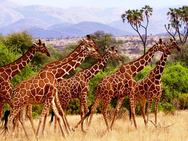 盛宴迁徙季 诚品肯尼亚安博塞利远眺乞力马扎罗10日