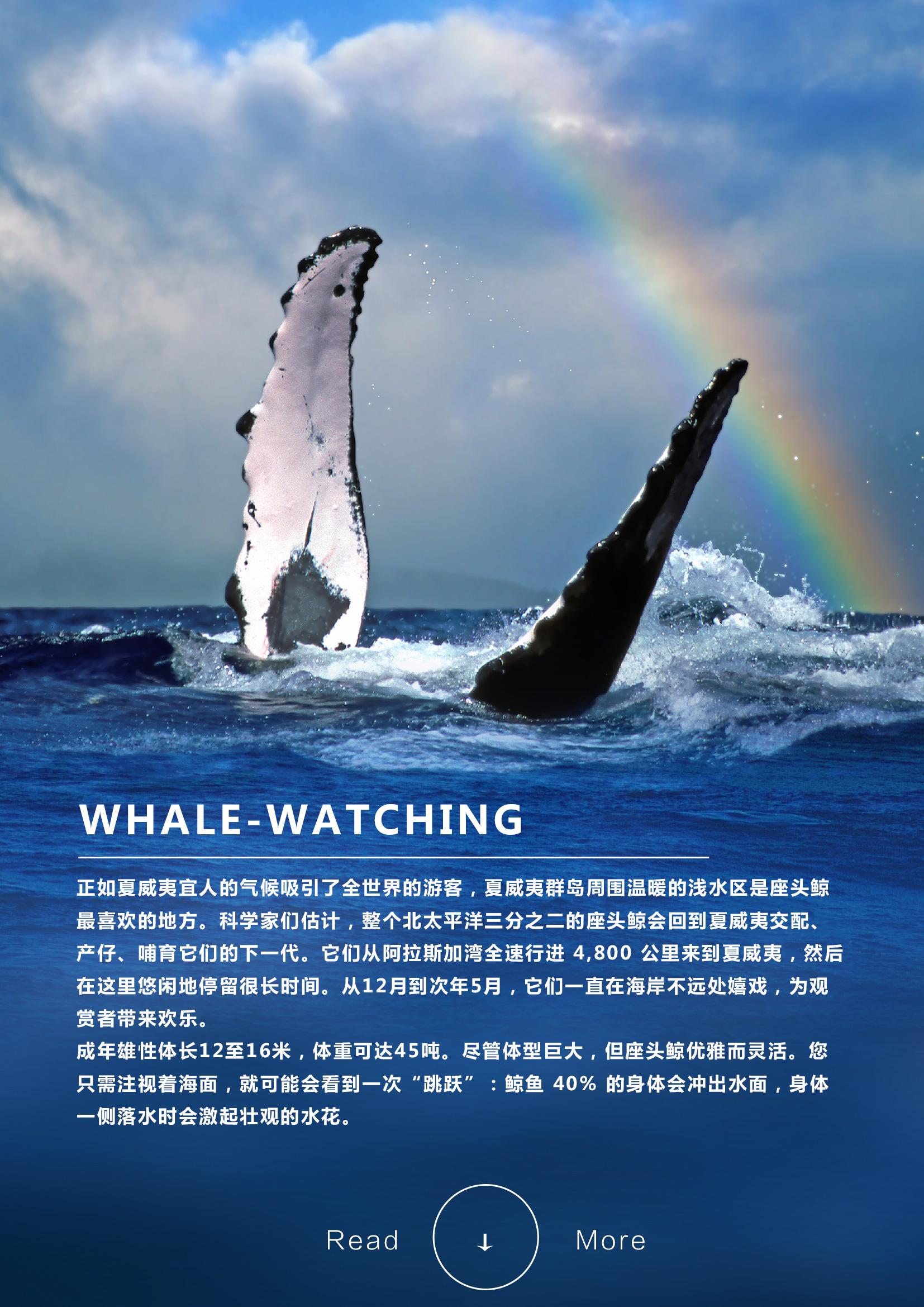 火山探秘——夏威夷欧胡岛+大岛深度7日天堂绝景之旅Whale-watching.jpg